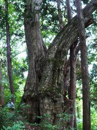 大きな栗の木の下で・・・