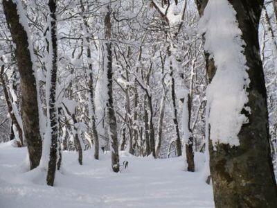 美しい雪景色(見た目)