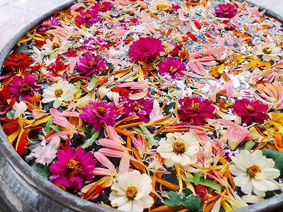 本日の「花遊び」